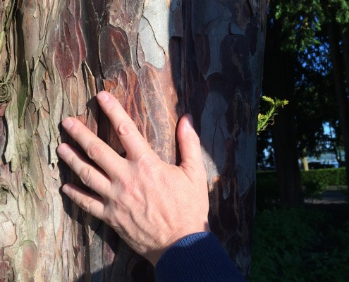 Handwerk- Hand am Baum